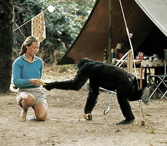 jane-with-chimpanzee-1b