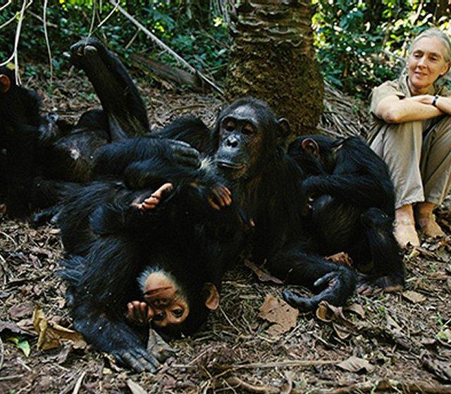 jane-with-chimpanzee-group-1b