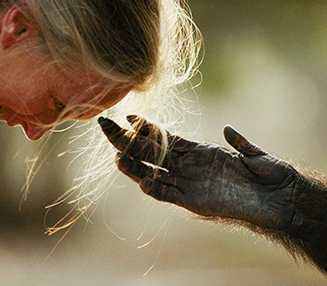 jane-with-chimpanzee-hand-1b